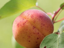 Free Peach With Spots Macro Shot Stock Photo - 75384000
