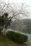 peachblossom im botanischen Garten Stockbilder