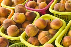 Peaches, 1 Stock Photography