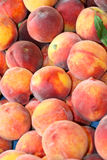 Peaches. This is a close up shot of bundle of peaches like nice food background Stock Photography