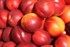 Peaches. Image of a peaches Stock Photography