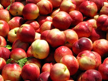 Peaches. At the market on a sunny day Royalty Free Stock Images