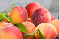 Peaches. A horizontal view of peaches Royalty Free Stock Photography