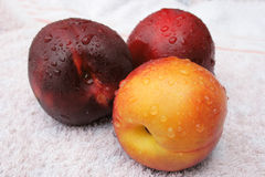 Peaches. On a towel with drops of water Stock Image