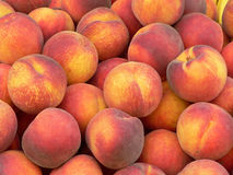 Peaches. Red peaches background autumn harvest Royalty Free Stock Photography