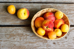 Peaches and apricots in basket Royalty Free Stock Photography