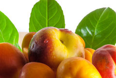 Peaches and apricots Royalty Free Stock Photos