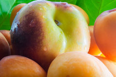 Peaches and apricots Royalty Free Stock Photo