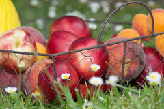 Peaches and apricots in the grass Stock Image