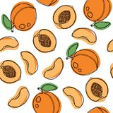 Peaches and apricots hand draw vector seamless pattern. stock illustration