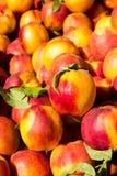 Peaches Background Image libre de droits