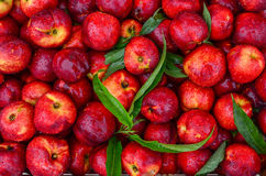 Peaches Background Lizenzfreies Stockbild