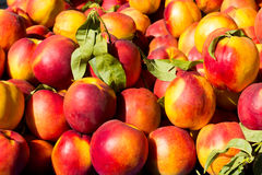 Peaches Background Royalty Free Stock Photography
