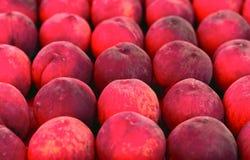 Peaches Background la scatola ha riempito di file della pesca rossa matura fresca Fotografia Stock Libera da Diritti