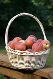 Peaches in a Basket. Fresh peaches in a wicker basket sitting on a deck railing Royalty Free Stock Image