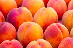 Peaches. Beautiful, ripe peaches with vivid colors Stock Image