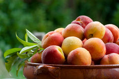 Peaches in a bowl stock photos