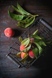 Peaches on branch Stock Images