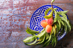 Peaches on branch Royalty Free Stock Images