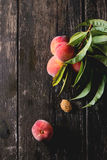 Peaches on branch Stock Photography