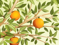 Peaches. Branch of tree with peaches and leaves vector illustration Stock Image