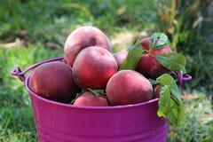 Peaches in a bucket Stock Photos