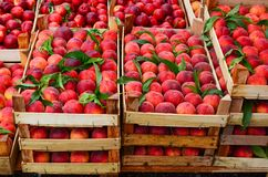 Peaches in crates Stock Photos