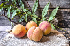 Peaches on cutting board on background the branch with leaves Stock Photography