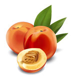 Peaches stock illustration