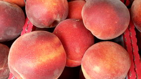 Peaches!. Fresh homegrown peaches Royalty Free Stock Images