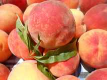Peaches. Fruit organic health natural peach summer soft fresh sweet Royalty Free Stock Photography