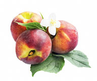 Peaches Fruits Isolated Stock Images