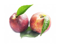 Peaches Fruits Isolated on White Royalty Free Stock Photo