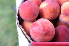 Peaches on the fruits market Royalty Free Stock Photography