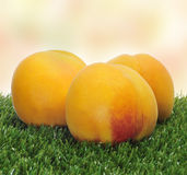 Peaches on the grass Stock Image