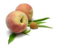 peaches jądra Zdjęcie Royalty Free