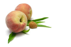 Peaches with Kernel. White peaches with leaves and kernel, isolated on white royalty free stock photo