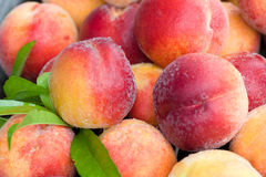 Peaches and leaves Royalty Free Stock Images
