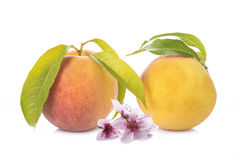 Peaches with leaves and flowers isolated on white Royalty Free Stock Photo