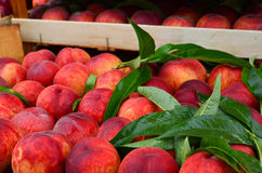 Peaches and leaves Stock Photos