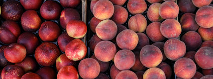 Peaches and nectarines on the counter for sale in a grocery shop. Royalty Free Stock Photos