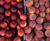 Peaches and nectarines on the counter for sale in a grocery shop. Crop. View from above stock image