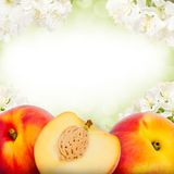 Peaches Stock Photography