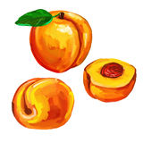 Peaches set  vector illustration  hand drawn Royalty Free Stock Image