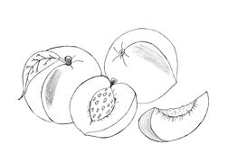 Peaches sketch Royalty Free Stock Images