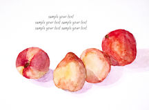 Peaches still life watercolor painted Royalty Free Stock Photography