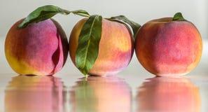 Peaches. Three beautiful peaches in row Stock Photo