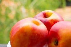 Peaches. Three Fresh Peaches on the white plate Royalty Free Stock Photo