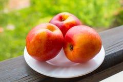 Peaches. Three Fresh Peaches on the white plate Stock Photos