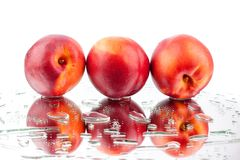 Peaches three whole in water drops on white background isolated close up royalty free stock photo